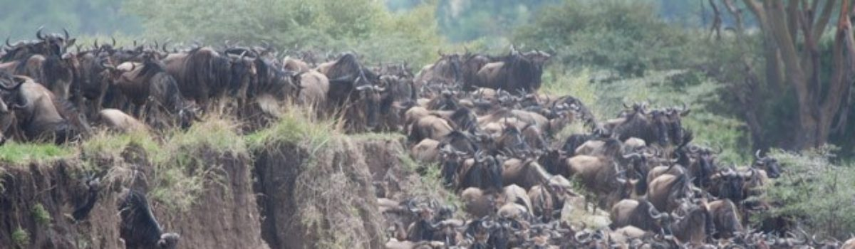 Videos from the Serengeti